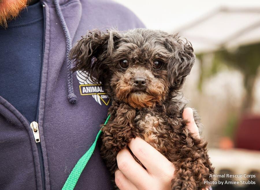 ARC BPF dog rescue